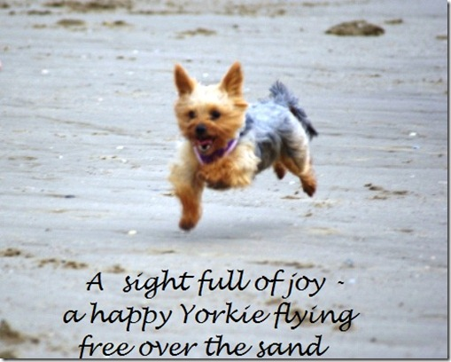 Tilly's dog flying haiga