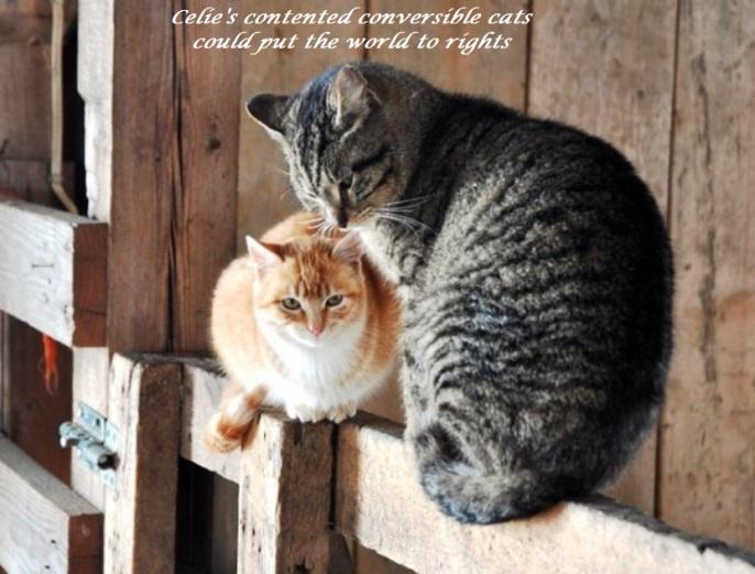 Celie#s conversible cat haiga