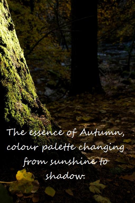 Autumn Haiga