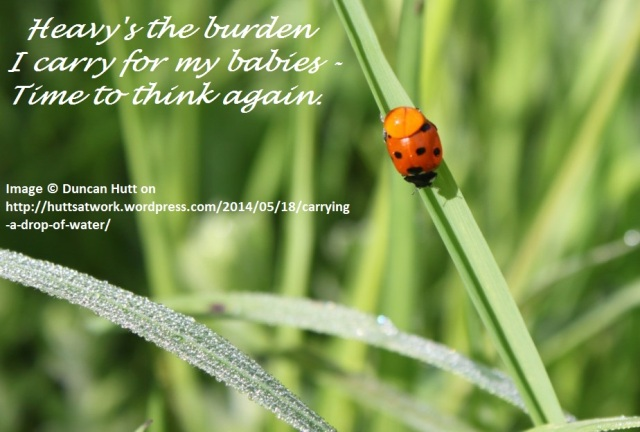 Duncan's ladybird haiga