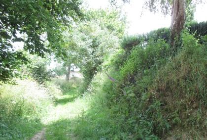 the grassy walk in high summer