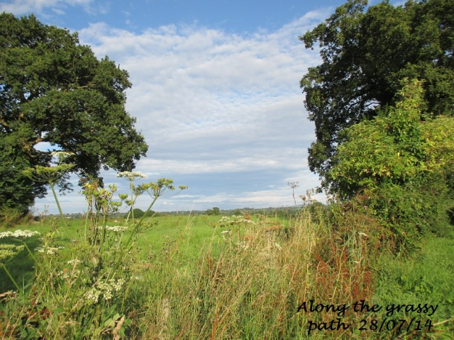 Along the Grassy Path 28.07.14