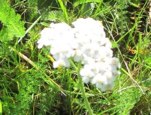 30.19.14  unknown white flower