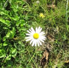 30.10.14 daisy