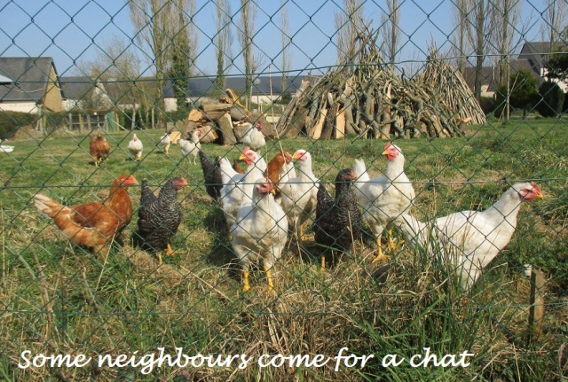 23.3.15 chicken chat