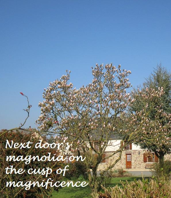 23.3.15 magnolia
