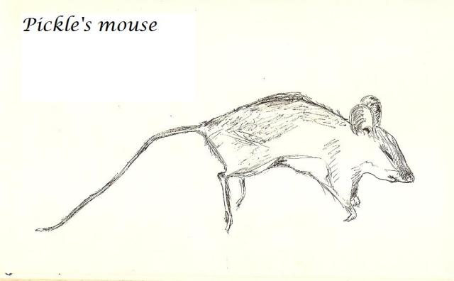 Pickle's Mouse