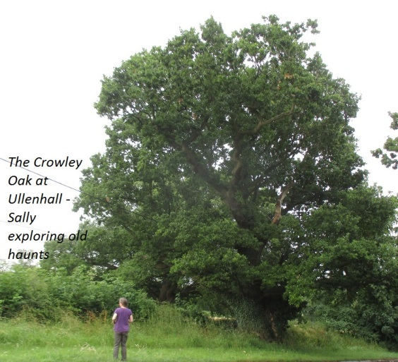 Ullenhall, the Crowley Oak 7.15