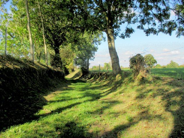 Autumn on the grassy path