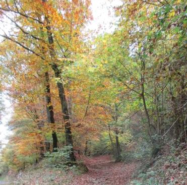 Autumn path near Hambye 30.10.15