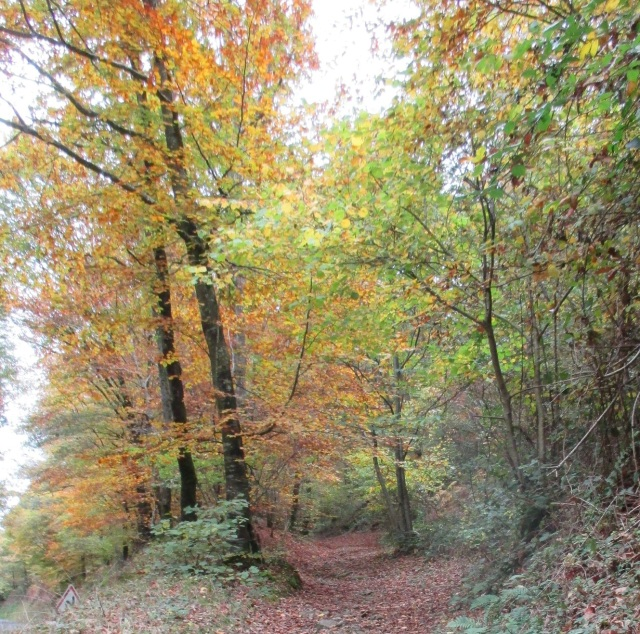 Autumn path near Hambye 30.10.15