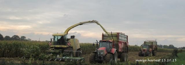 maize harvest 15.10.15