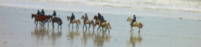 horses at Coutainville 3