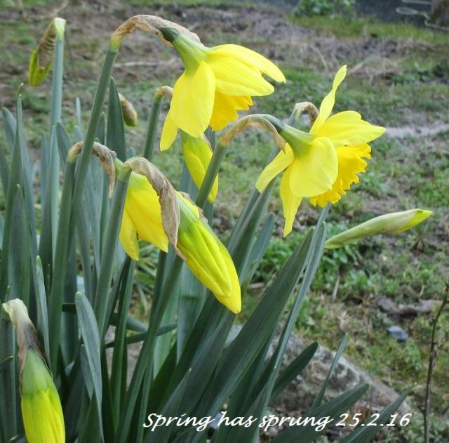 Spring has sprung 25.2.16