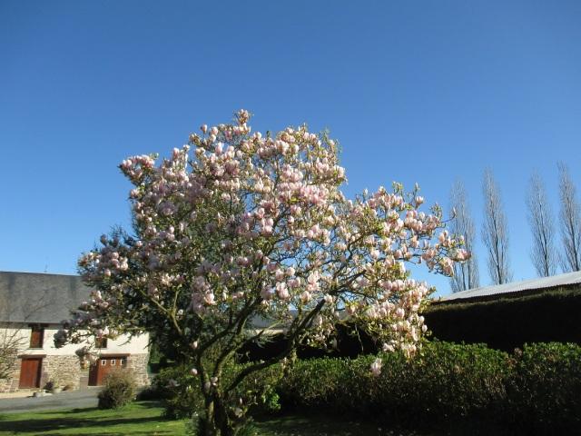 magnolia 13.4.16