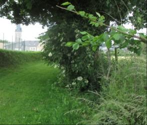 grassy path again