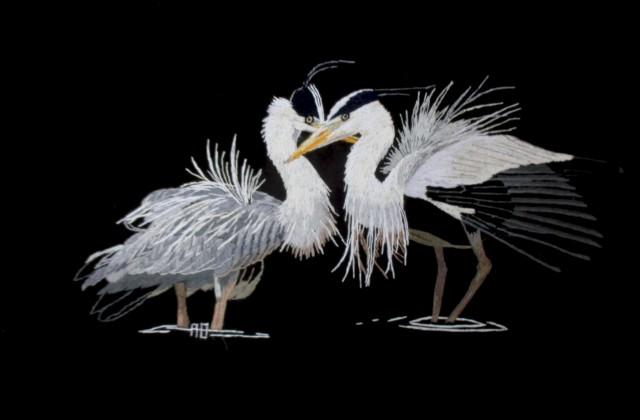 Jock's herons