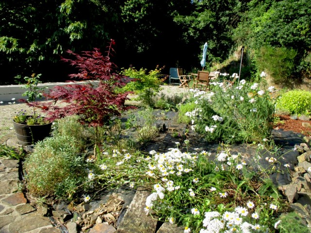 Mill back garden 24.6.16