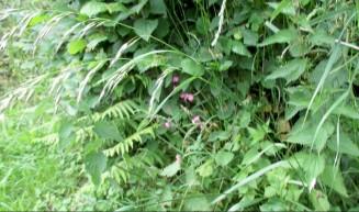 more grassy path