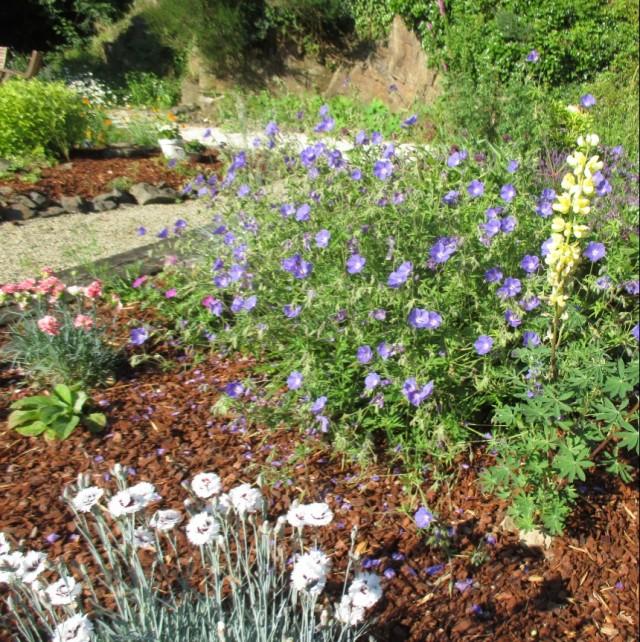 More Mill garden 14.6.16