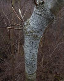 Crustose Lichen (c) Sally Hutt