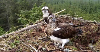 pretty pair on nest 1 2